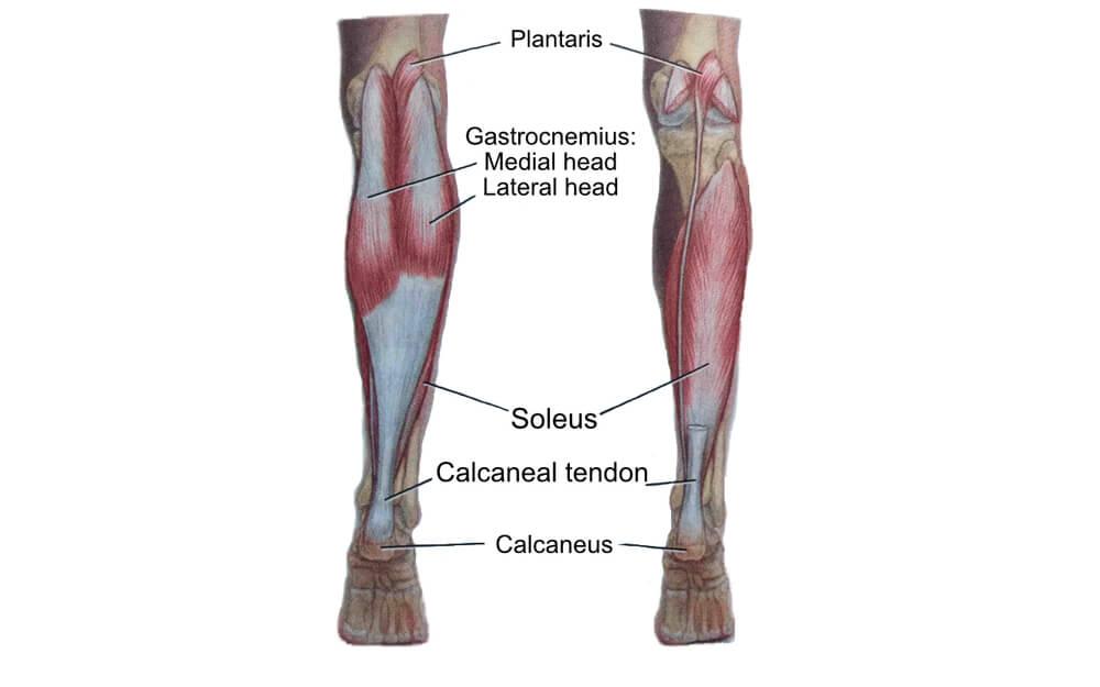 Calf | Stretches