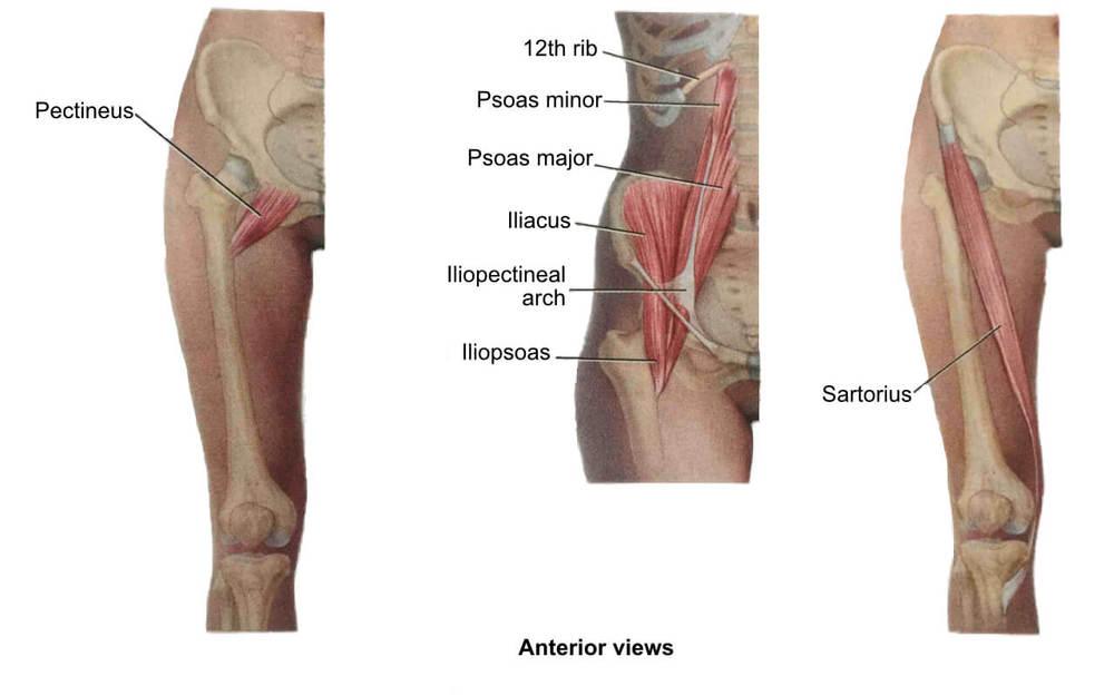 Hip Flexors | Hip Stretches & Quad Stretches