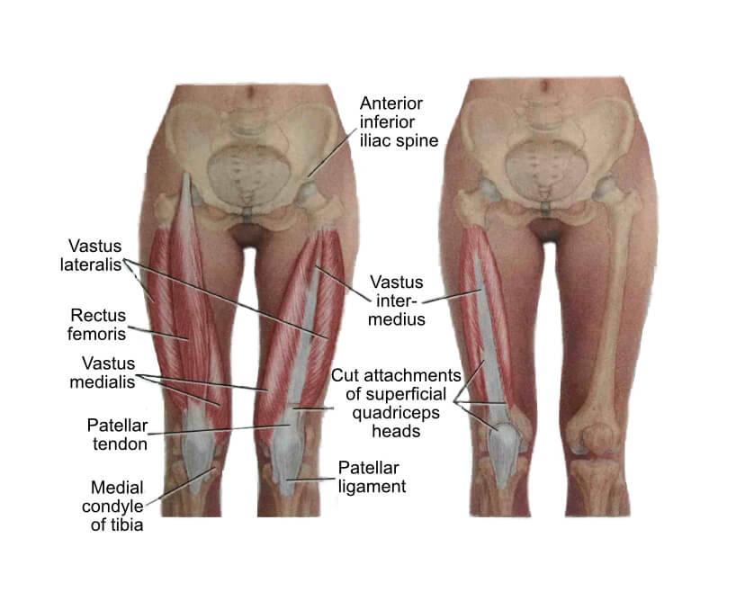Quadriceps | Hip Stretches & Quad Stretches